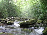 South Fork of Citico Creek in the Citico Creek Wilderness.