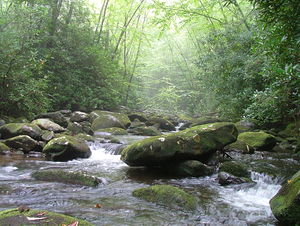 Cherokee National Forest - South Fork of Citico Creek in the Cherokee National Forest