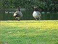 Southwark Park Boating Pond Wildlife.JPG