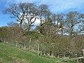 Southwick Motte, The Brough..jpg