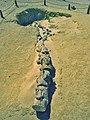 Spine of Dorudon.jpg