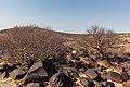 Spitzkoppe, Namibia, 2018-08-04, DD 41.jpg