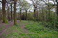 Spring in Great Bull Wood - geograph.org.uk - 160515.jpg