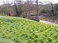Spring in the Park - geograph.org.uk - 1225630.jpg