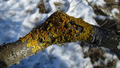 Spring lichens 01.png
