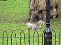 Squirrel at St. James's Park - panoramio.jpg