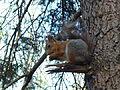 Squirrel eating. Memorial park at Sokol 3.JPG