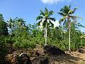 Sri Lanka (Southern Province)-Vegetation (12).jpg