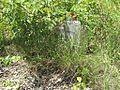 St Pauls Cemetery Northaven TN 003.jpg