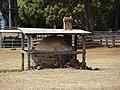 Starr-060928-0512-Cinnamomum camphora-habit and portuguese oven-Makawao Veterinary Clinic-Maui (24866618815).jpg