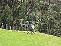 Starr-120627-7656-Eucalyptus sp-habitat and helicopter landing in pasture-Hawea Pl Olinda-Maui (25159296876).jpg