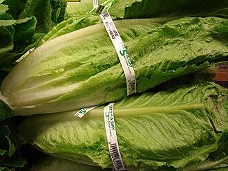 Romaine lettuce - Romaine lettuce