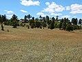 Stipa comata var. comata at Medicine Rocks State Park (35661266406).jpg