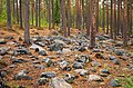 Stones in forest.jpg