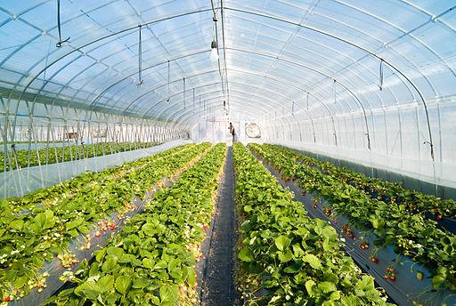 Estufas agricolas vantagens custo e fornecedores plubee for Green house plans with photos