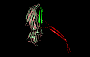 Pore-forming toxin - Image: Structural comparison of pore form alpha Haemolysin (pink red) and soluble form PVL (pale green green) toxins PDB 7AHL and 1T5R