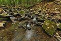 Stužická rieka, Národná prírodná rezervácia Stužica, Národný park Poloniny (04).jpg