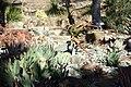 Succulents - Leaning Pine Arboretum - DSC05770.JPG