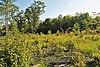 Suk Cerney Peatlands.jpg