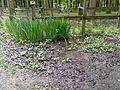 Sumpf am Elchgehege - panoramio.jpg