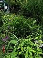 Sunny border - August 2009 - Flickr - peganum.jpg