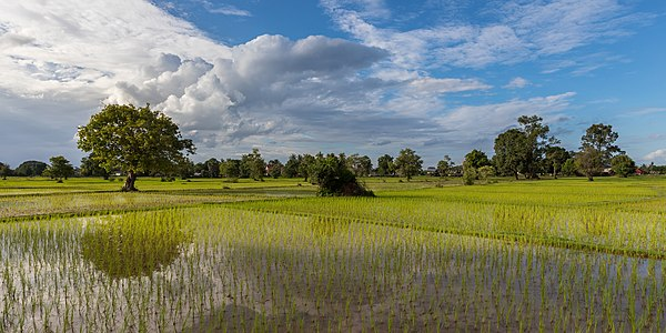 Sunny green paddy fields with water reflection