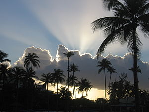 Sunset behind palm trees and clouds from the b...