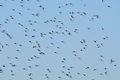 Swarm of midges Lacreek NWR (12842933365).jpg