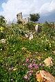 Syrian ruins - Flickr - edbrambley.jpg