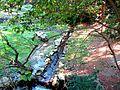 THESSALONIKI-ZOO PARK - panoramio (5).jpg