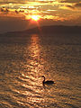 Taupo Lake-2806.jpg