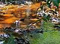 Tea Colored Water (15012903263).jpg
