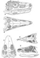 The Osteology of the Reptiles p80.png
