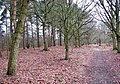 The Peddars Way skirting Brettenham Heath - geograph.org.uk - 1701419.jpg