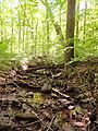 The Sourland Mountain Preserve, Hillsborough, New Jersey, USA June 2012 - panoramio (12).jpg