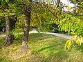 The TNU Botanical Garden in Simferopol, Crimea, Ukraine 31.JPG