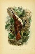 The birds of Tierra del Fuego (1907) (5974504397).jpg
