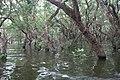 Tonle Sap Lake (9731731076).jpg