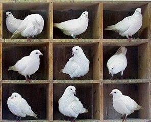 Illustration of the pigeonhole principle