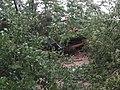 Tornadoschaden Grillhütte Hambrücken.jpg