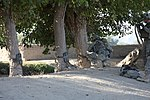 Tree-clearing operation in Kandalay 100925-A-KG159-099.jpg