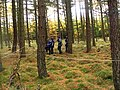 Tree Challenge in the High Wood - geograph.org.uk - 151367.jpg
