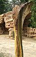 Tree Stone in Botanic Garden Singapore.jpg