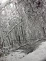 Trees blocking road in Elkins, (WV) (8148649710).jpg