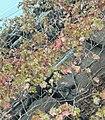 Trees leaves in autumn.jpg