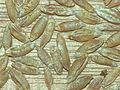 Triticale seeds.jpg