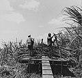 Tropenmuseum Royal Tropical Institute Objectnumber 20007176 Het laden van geoogste suikerriet op.jpg