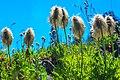 Trophy Mtn meadows, Clearwater (8466105871).jpg