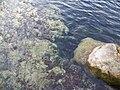 Troy Springs SP springs rocks01.jpg