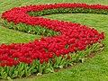Tulip 1300178.jpg